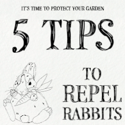 blog post image with text 5 tips to repel rabbits