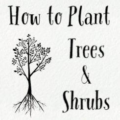 How to Plant Trees & Shrubs image of text and tree with roots